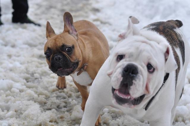4fd468b3d54b6 10 rzeczy na które musisz zwrócić uwagę kupując psa z hodowli