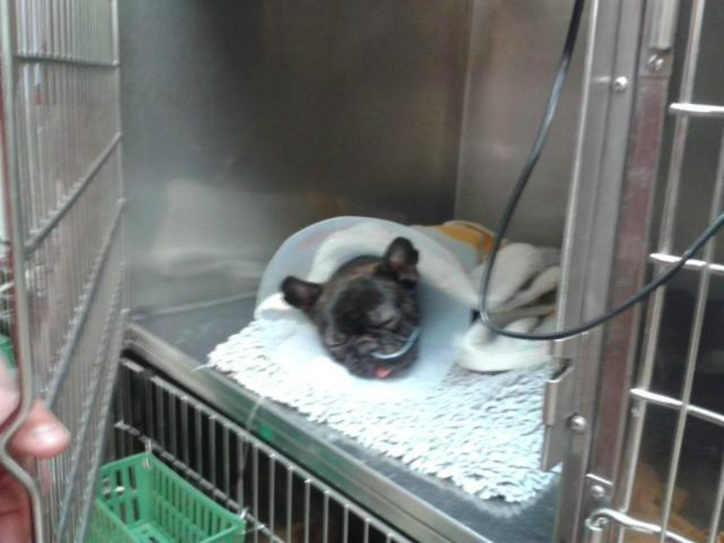 Rocky po udanej operacji