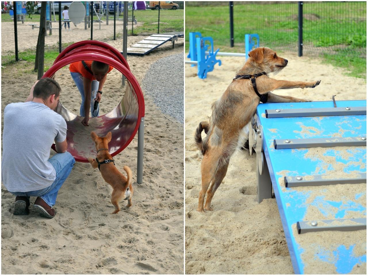 wilanów dog park