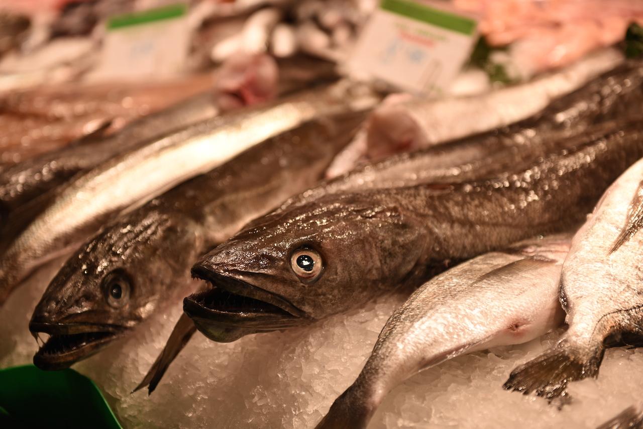 świeże ryby targ la boqueria
