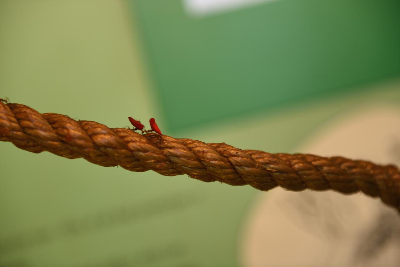 W budynku poświęconym owadom, robalom i stworzeniom, których na co dzieństaram się unikać zobaczyłam mnóstwo ciekawych rzeczy. Widzicie te mrówki niosące kawałki liści? No właśnie, mrówki miały przygotowane dłuuugie liny dzięki którym transportowały liście z jednego akwarium do drugiego. Pomieszczenie z pająkami chodzącymi po pajęczynie tuż nad naszymi głowami był dla mnie niczym dom strachu.