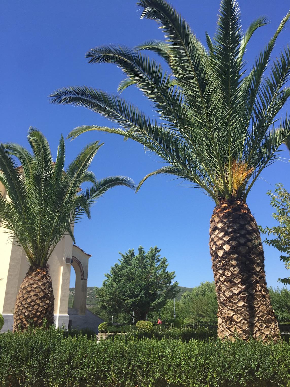 palmy zawsze spoko