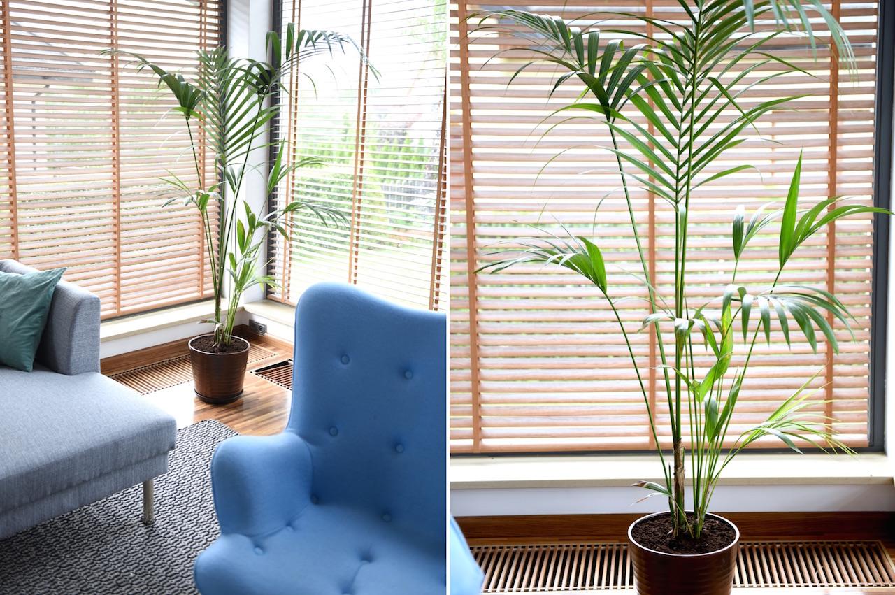 palma kencja