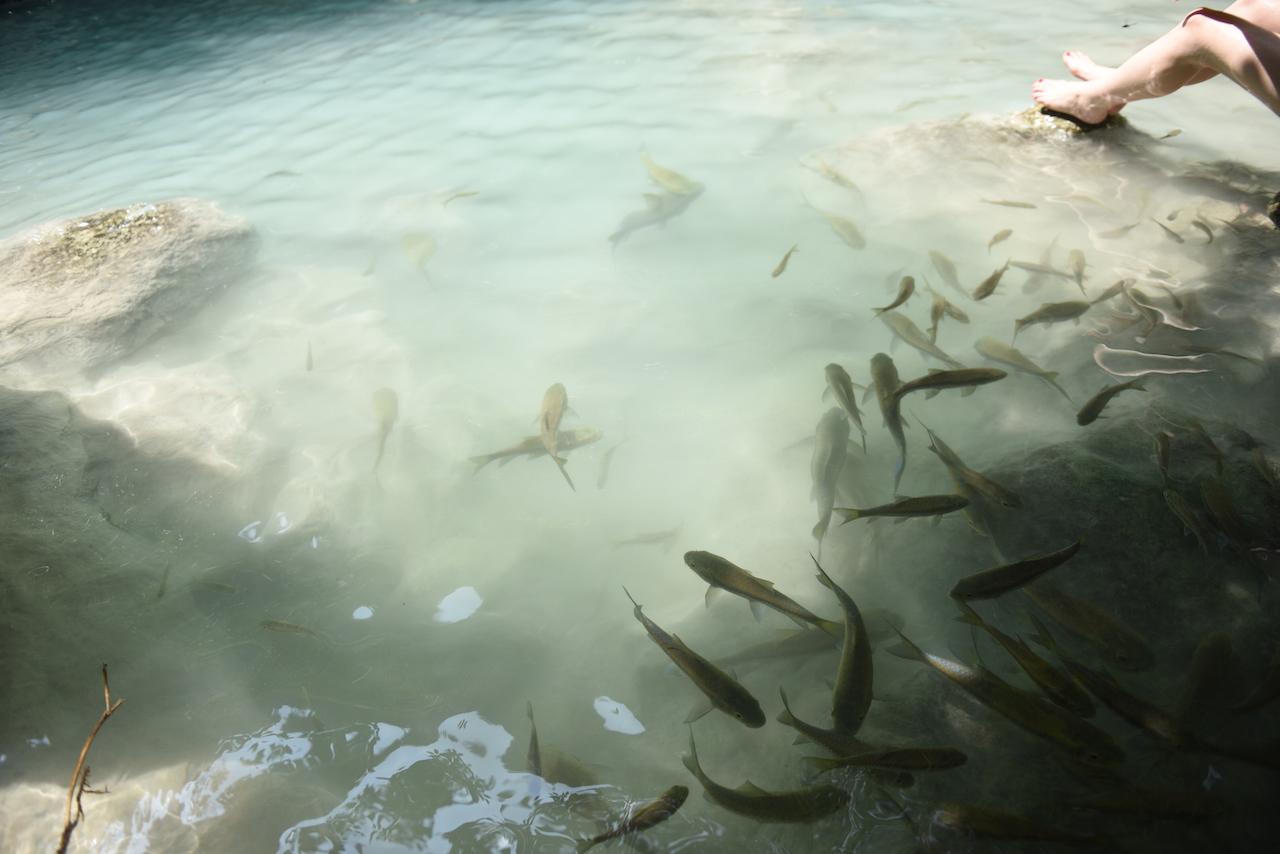 zarloczne-ryby