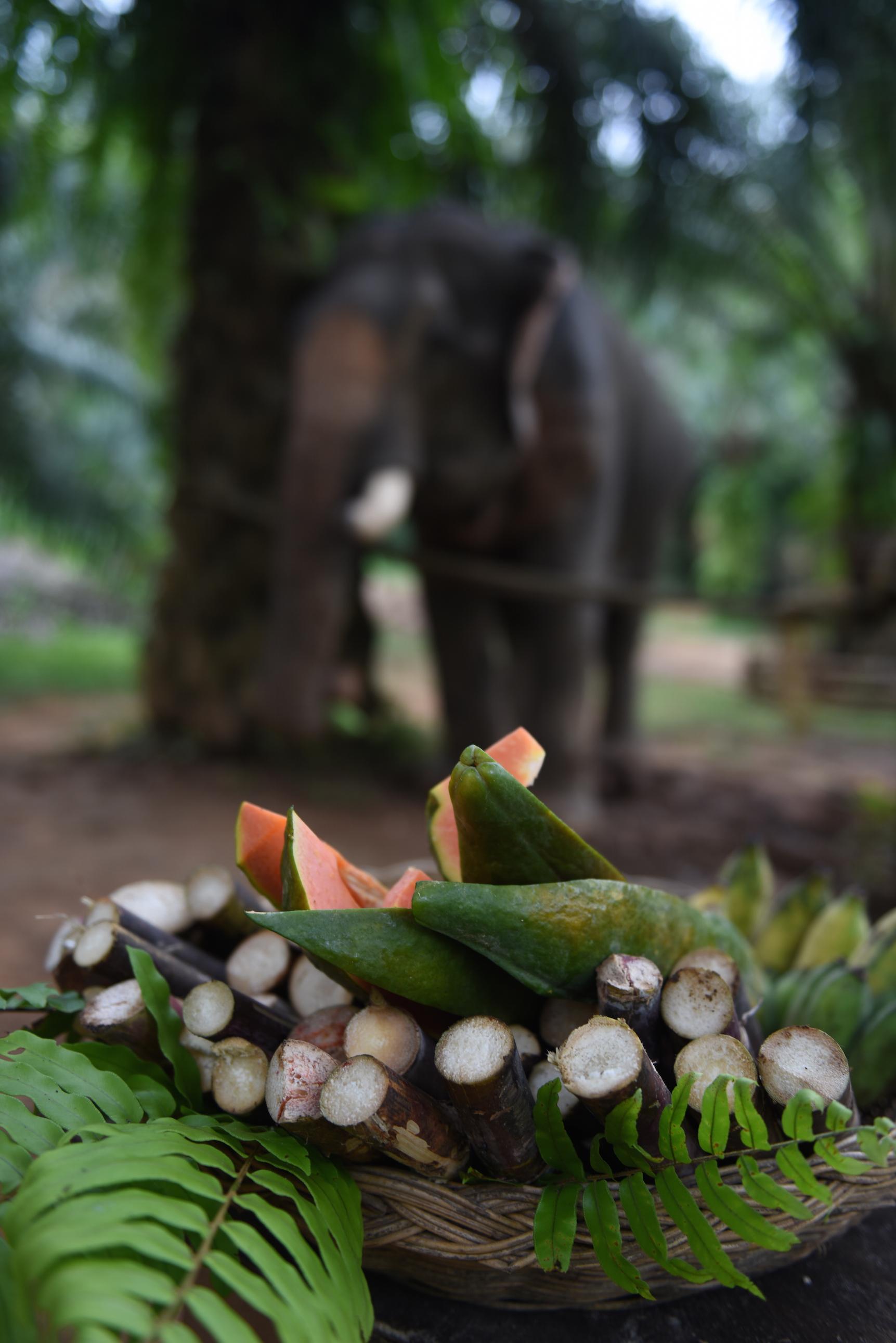 slonikk