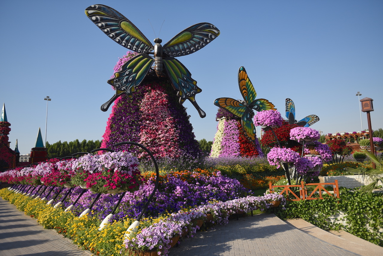 butterfly-miracle-garden