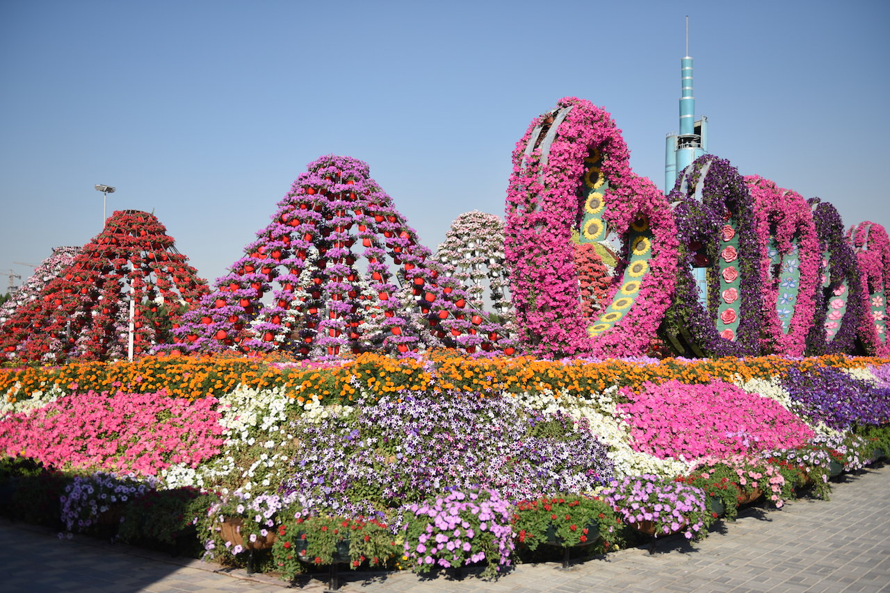 miracle-garden-dubai-photos