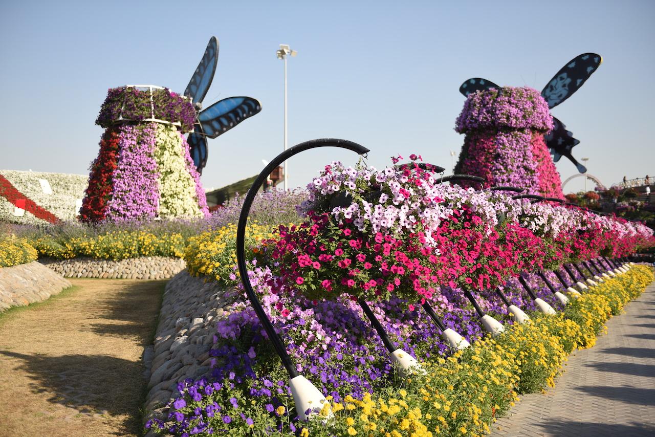 photos-miracle-garden-dubai