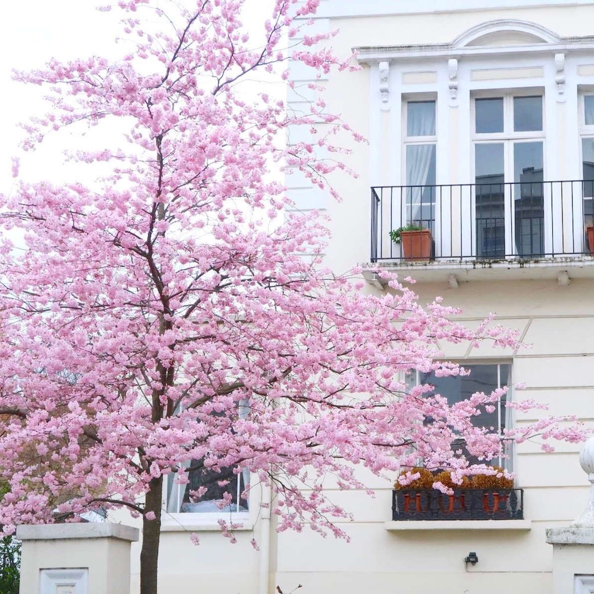 Notting Hill rozkwita wiosną. Wtedy jest tam zdecydowanie najpiękniej!