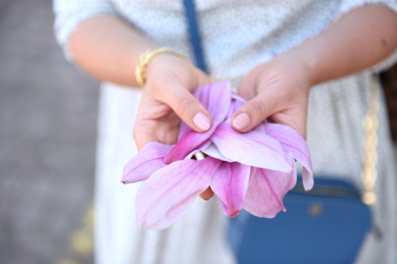 liście magnolii